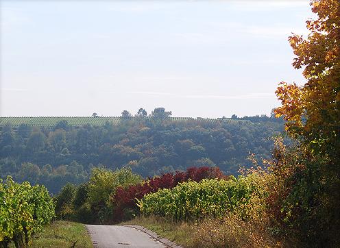 Wiesenbronn - Landschaft
